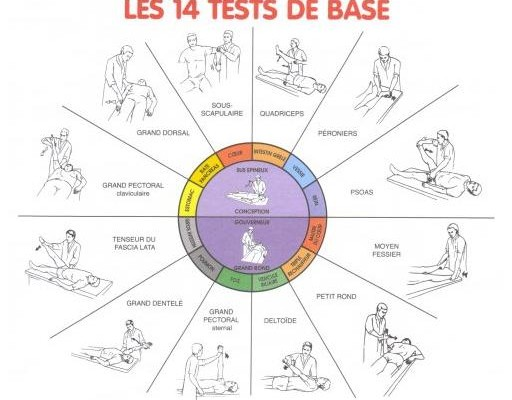 14 tests musculaires